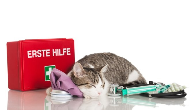What To Prepare For Your Cat's First Aid Kit?